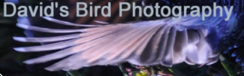 david's bird photos